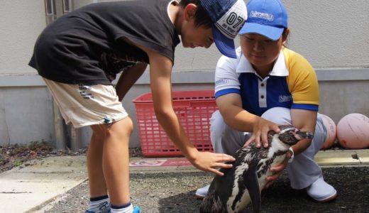 海の生き物たちと触れ合いながら楽しく学べる 小学生対象の学習プログラム 鴨川シーワールド「サマースクール」参加者募集(7/1より先着順)