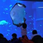 ジンベイザメと一緒に寝よう♪ジンベイザメ柄ブランケットももらえる「海遊館おとまりスクール・幼児とおとまり」参加者募集中!